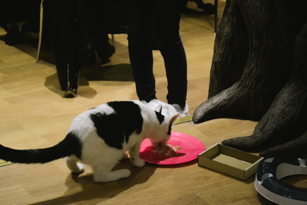 catc-cafe-lady-dinah-london-londres-gatos-4